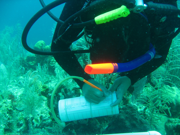 Study finds added ecosystem benefits from underwater conservation zones