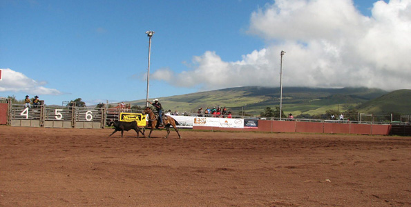 Island's best paniolo saddle up for annual rodeo and celebration of Hawaii High School Rodeo Association