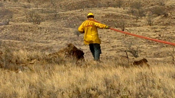 A firefighter pulls a hose line towards the leading edge of the fire in Waikoloa. Photo by Bonnie Palos | Special to Hawaii 24/7