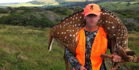 Hunters encouraged to help control axis deer