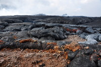 The lava flow from the north spatter cone ran over old cinder deposits from the early fountaining phases of Puʻu ʻŌʻō in the 1980s. Cinders sticking to the front of the pāhoehoe lava were lifted up as the front of the pāhoehoe toes inflated. Photo courtesy of USGS/HVO