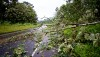 Trees fallen on Highway 130 in Puna from Tropical Storm Iselle Friday, August 8, 2014. Photography by Baron Sekiya | Hawaii 24/7