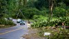 Many trees down, utility poles snapped and lines down along Highway 132 Kapoho Road. Photography by Baron Sekiya | Hawaii 24/7