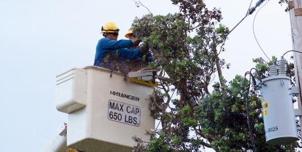A Hawaiian Electric Company crew from Oahu clears an Ohia tree from power lines in Hawaiian Acres Wednesday (Aug 13). Photo courtesy of Hawaiian Electric Co.