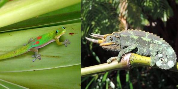 lizards-t
