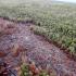 LavaTalk: September 23, 2014 update on Kilauea
