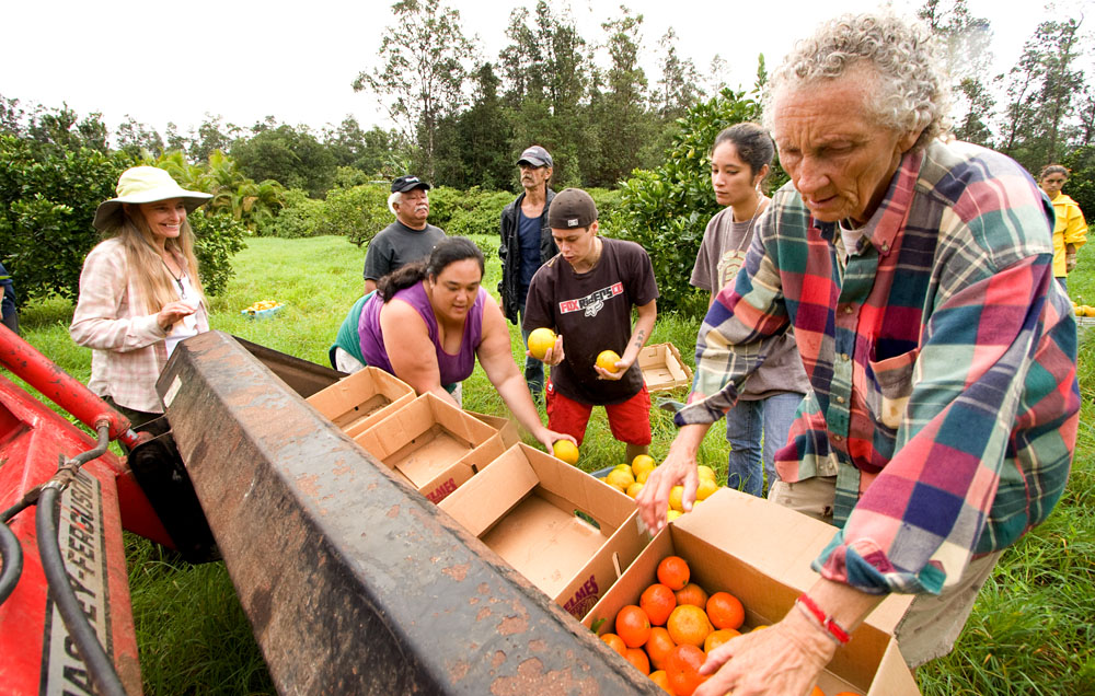 On a rainy Wednesday morning before Thanksgiving, Fred and Betty Blas have gathered friends and nine high-school students from Hawaii Academy of Arts and Sciences Public Charter School to harvest fruit from an organic farm in Kurtistown. The produce will be donated to Da Poi Bowl food pantry in Pahoa the Friday after Thanksgiving.