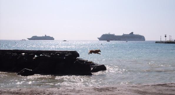 dog-off-seawall