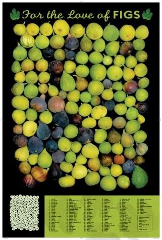 farming-fig-poster