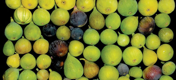Farming with Love: Choosing the Best Figs for Hawaii