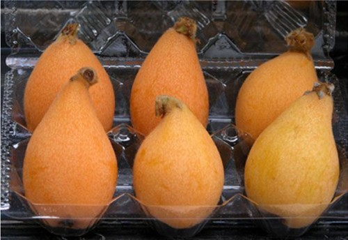 Packaged loquat in Japan.