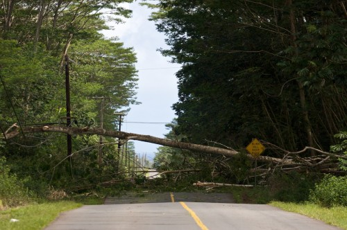 A large tree fell across Makuu Drive between 15th and 16th Avenues in Hawaiian Paradise Park.