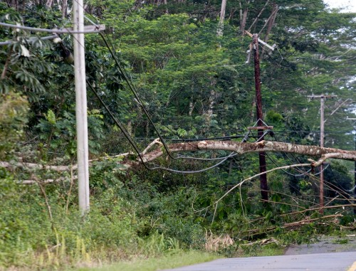 A large tree fell across utility lines along Makuu Drive.