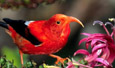 Publication lists birds in Hawaii's national parks
