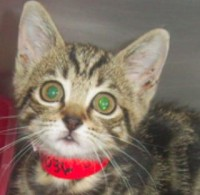 hihs-cat