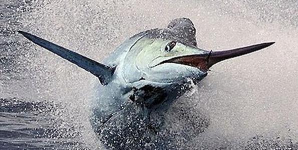 Photographer Jon Schwartz tells his latest big fish tale