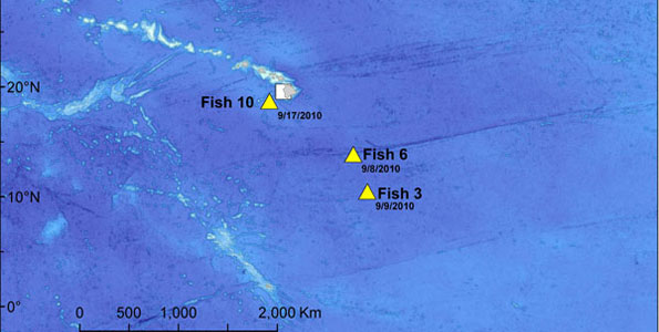 Three tags from Great Marlin Race surface; latest one just 85 miles west of Kona
