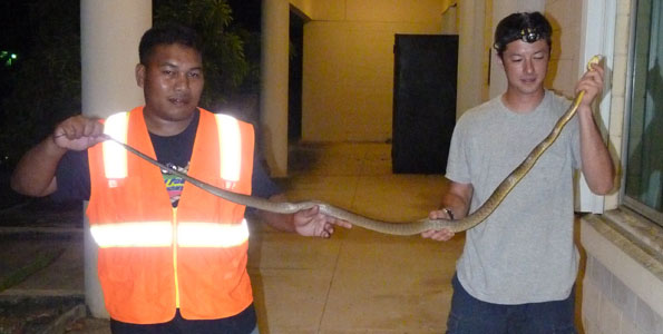 Nine Pacific island-based personnel, including several from Hawaii Invasive Species Committees, went to Guam for a three-week training session on the Brown Tree Snake.