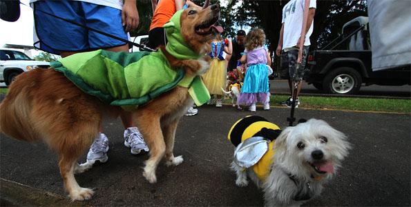 The Hawaii Island Humane Society Halloween Pet Walk paraded around Queen Liliuokalani Gardens in Hilo Saturday (Oct 29) and Kona on Sunday.