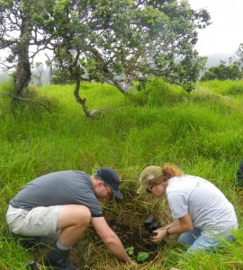 Kohala Watershed Partnership community volunteers Brooks Rownd and Laura Frailey plant ohe mauka, an endemic tree, in the Kanea'a Biodiversity Preserve on the slopes of Kohala Mountain.