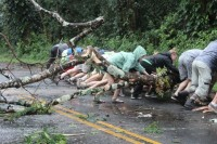 Volunteers push a fallen Albizia tree, Lava Tree State Park, off the roadway Saturday afternoon. Photo special to Hawaii 24/7 by Julie Miller