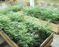 Marijuana growing in underground bunker