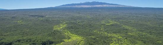Ohana Sanctuary (Photo courtesy of Hawaii Life Real Estate Brokers)
