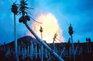 Hawaii Volcanoes National Park. 1960 eruption of Kilauea Volcano. Papaya trees stripped, fountain in the background at Kapoho. January 1960. Photo courtesy of USGS