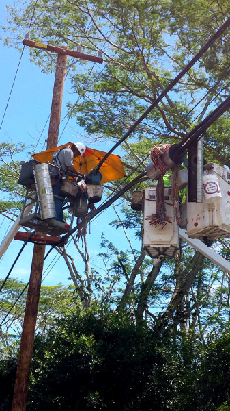 A Hawaiian Telcom splicer working on repairs to an aerial cable on the Big Island. Photo courtesy of HawaiianTel.