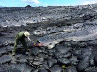 An HVO geologist collects a fresh lava sample for chemical analysis. The lobe being sampled was typical of the many scattered pāhoehoe breakouts along the flow margin today. Photo taken Thursday, June 23, 2016 courtesy of USGS/HVO