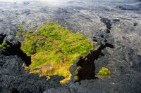 Only a few short sections of road in Royal Gardens subdivision remain uncovered by lava. In this kipuka, about 200 m (220 yards) of Orchid Street is still exposed. Photo taken Tuesday, July 19, 2016 courtesy of USGS/HVO