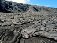 Sluggish pāhoehoe breakouts remain active on the coastal plain, near the base of the pali. Over the past week, these breakouts have not advanced any significant distance. There were also several small lava channels on the steep section of the pali today (May 27). Photo taken Saturday, May 27, 2017 courtesy of USGS/HVO