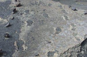 Footprints fossilized in volcanic ash in the Ka'ū Desert will be the subject of October's After Dark in the Park. NPS Photo.