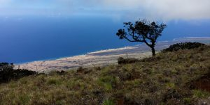 Kahikinui Forest Reserve, Maui. Photo courtesy of DLNR.