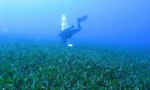 Collecting samples in the fields of algae.