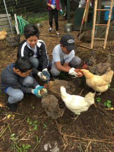 Waimea Middle School students with their garden hens.