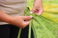 'ulana niu (weaving coconut leaves)