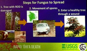 The causes of Rapid Ohia Death. USGS image